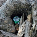 "<a target=""_blank"" href=""http://en.wikipedia.org/wiki/File:Small_geocache_in_a_stump,_revealed.jpg"">An example of a revealed geocache in a stump</a> von <a target=""_blank"" href=""http://commons.wikimedia.org/wiki/User:Addihockey10"">Addihockey10</a> unter <a target=""_blank"" href=""http://creativecommons.org/licenses/by-sa/3.0/deed.de"">CC BY-SA 3.0</a>"