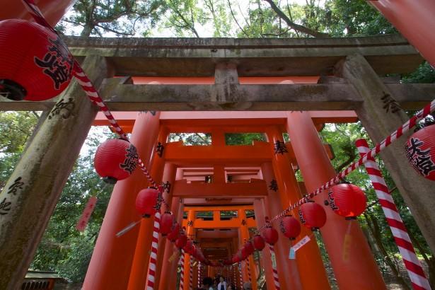 Dieser Schrein ist bekannt für seine Torii-Tunnels.