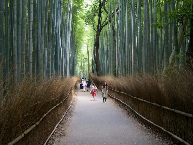 Bambus.
