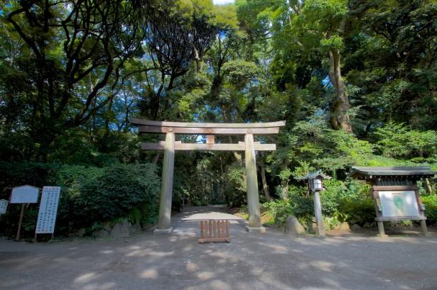 Nach Shibuya ging's durch den Yoyogi Park zum Meiji Schrein.