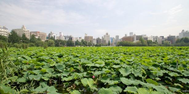 Im Ueno Park.